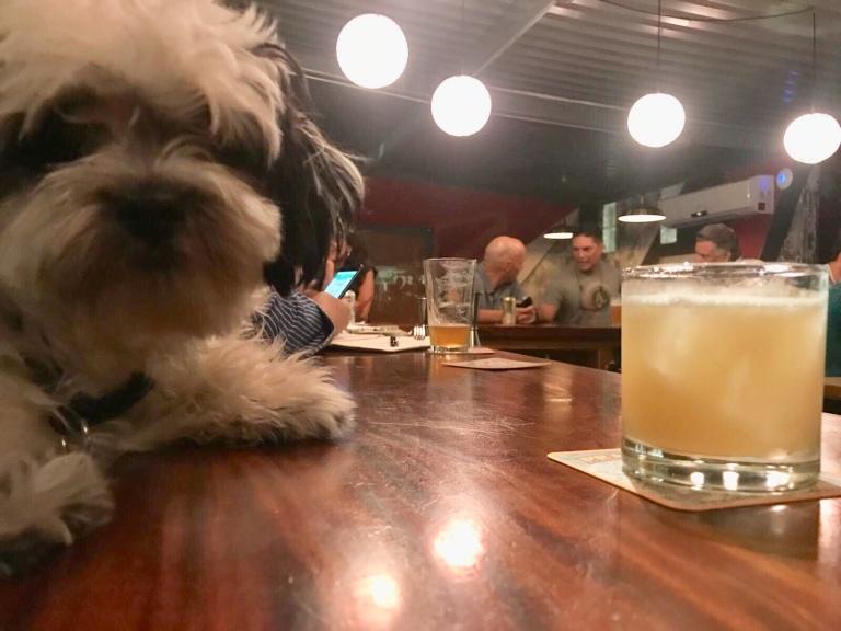 Seamos todos temerarios como mi perro Yunque.